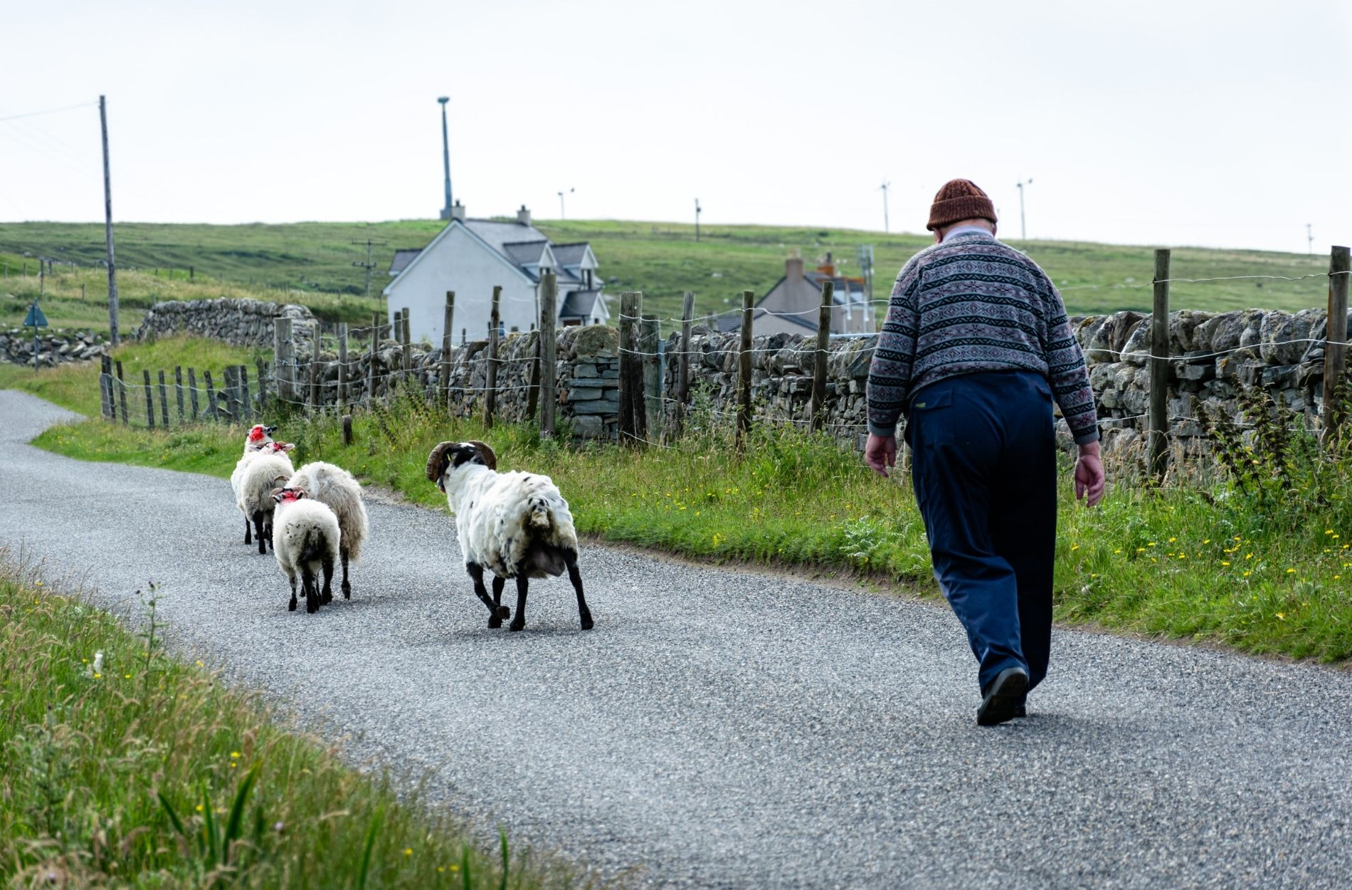 taking car of the sheep in the outer hebrides by liebre style